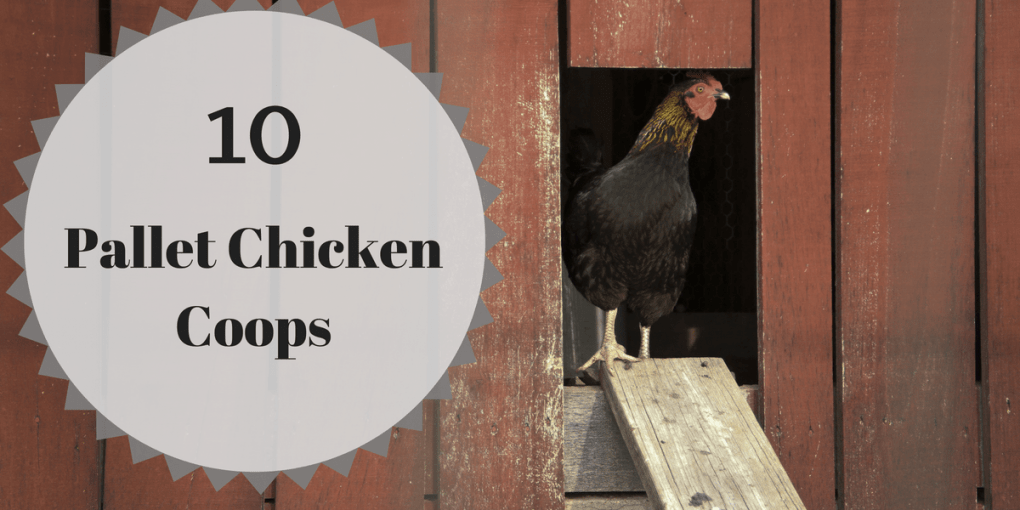 10 Pallet Chicken Coops
